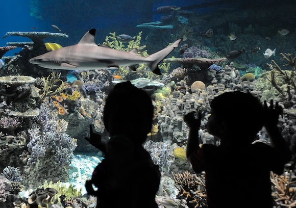 National Aquarium in Baltimore hires architect as it plots real estate moves